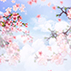 Peach Flower Blossoming - VideoHive Item for Sale