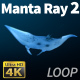 Manta Ray 2 - VideoHive Item for Sale