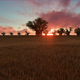 African Savanna Sunset - VideoHive Item for Sale