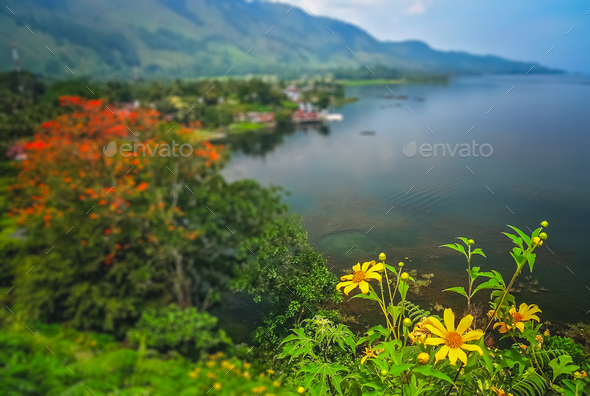 Flowers on the shore of Lake Toba in Sumatra - Stock Photo - Images