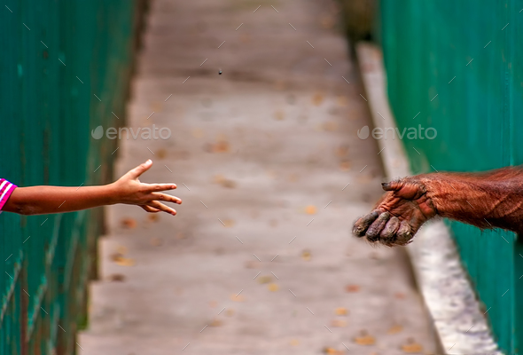 Child throwing nut to monkey in a zoo - Stock Photo - Images