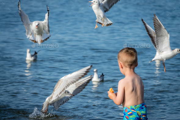 Little caucasian boy feeding seagulls - Stock Photo - Images