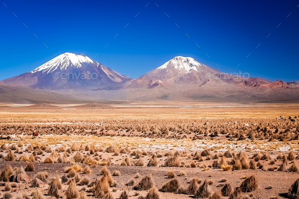 Nevado Sajama and Parinacota volcanoes - Stock Photo - Images
