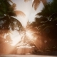 Sunset Beams Through Palm Trees - VideoHive Item for Sale