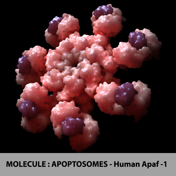 Molecule : Apopstomes - Human Apaf-1 - 3DOcean Item for Sale