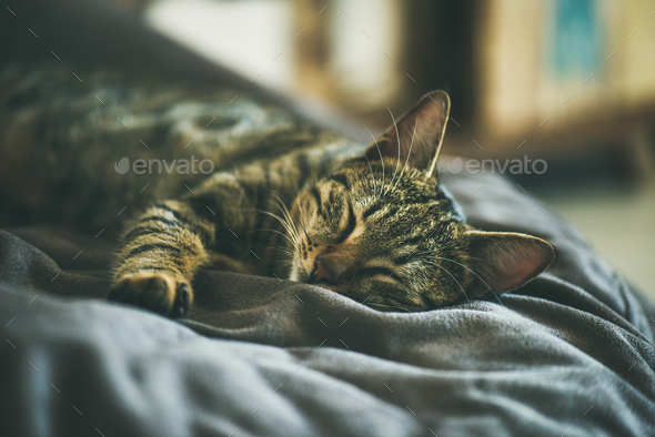 Cute grey cat sleeping on the coach - Stock Photo - Images