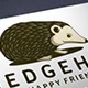 Illustrative Hedgehog Logo Template