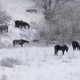 Horses in the Snow - VideoHive Item for Sale