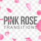 Pink Rose Transitions - VideoHive Item for Sale