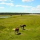 Grazing Horses In A Meadow - VideoHive Item for Sale