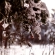 View of the Glade in the Winter Forest with Children Playing. - VideoHive Item for Sale
