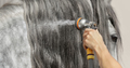 Long glitter mane of gray horse is washed with water from hose.  - PhotoDune Item for Sale