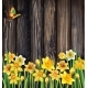 Daffodils Flowers on the Wooden Background - GraphicRiver Item for Sale