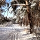 Walk Along the Path in the Snowy Forest. Stabilized Gimbal Pov Shot. Sunny Day. - VideoHive Item for Sale