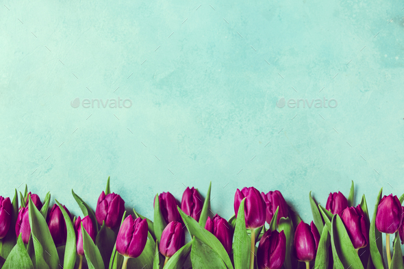 Purple tulips border - Stock Photo - Images