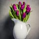 Levitating purple tulips - PhotoDune Item for Sale