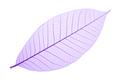 Purple decorative skeleton leaf on white - PhotoDune Item for Sale