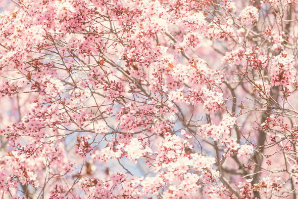 Spring blossom - Stock Photo - Images