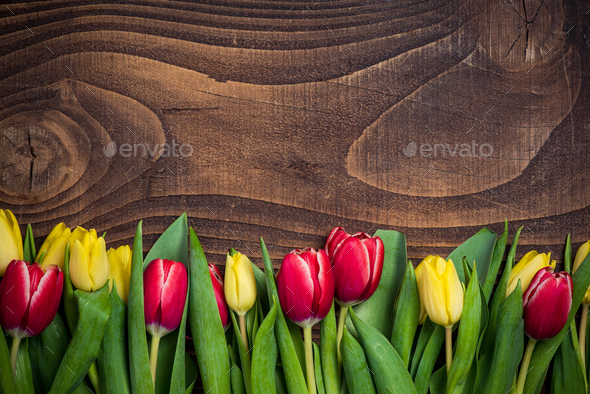 Red and yellow tulips flowers for Mothers Day - Stock Photo - Images