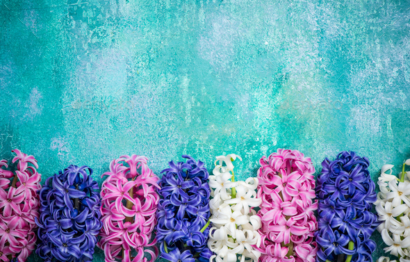 Hyacinth flowers on concrete slate, colorful card mock up - Stock Photo - Images