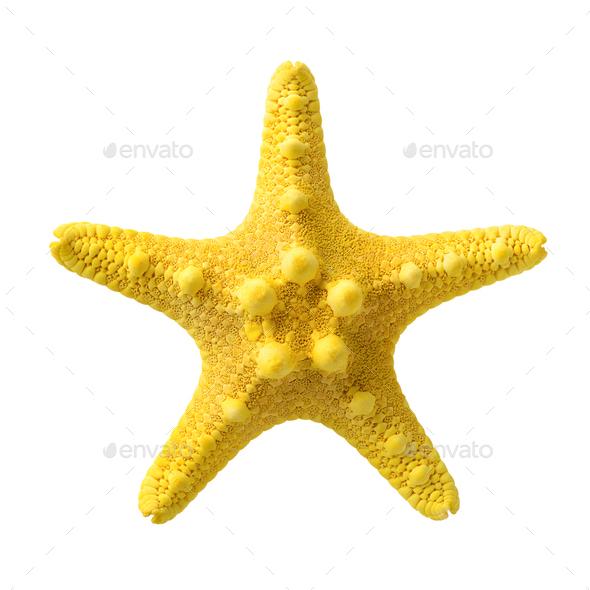 Yellow starfish - Stock Photo - Images