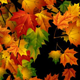 Autumn Background 1 - VideoHive Item for Sale