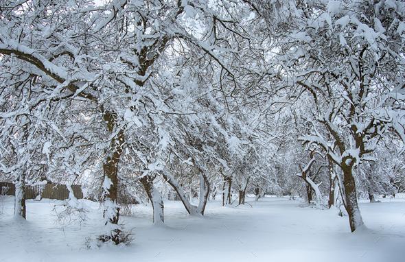 winter garden - Stock Photo - Images
