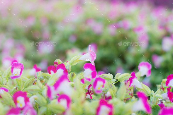 Beautiful purple flowers - Stock Photo - Images