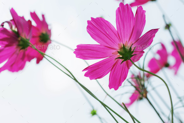 cosmos at the sky - Stock Photo - Images