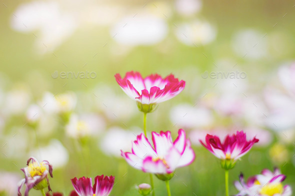 flowers in garden - Stock Photo - Images