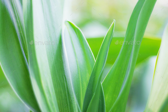 Green leaves with refreshing - Stock Photo - Images