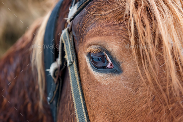 Horse d8c 4978 - Stock Photo - Images
