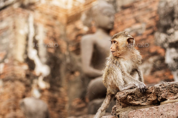 Monkey is sitting of temple - Stock Photo - Images