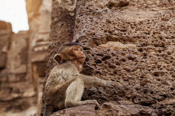 Monkey is sitting on stone - Stock Photo - Images