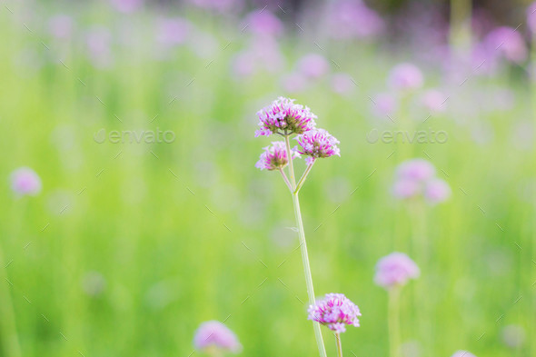 Purple flowers with colorful - Stock Photo - Images