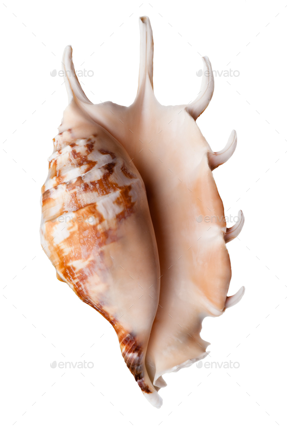 Empty sea shell - Stock Photo - Images