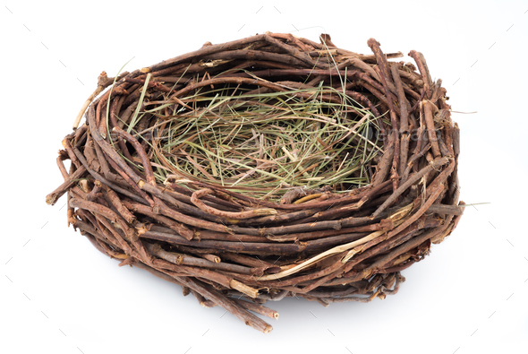 Empty nest - Stock Photo - Images