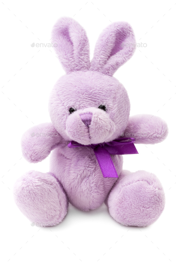 Bunny - Stock Photo - Images