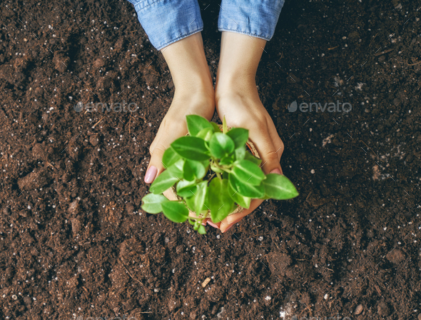 Person holding green sprout. - Stock Photo - Images