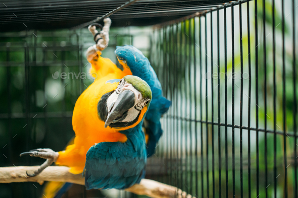 Blue-and-yellow Macaw Also Known As The Blue-and-gold Macaw In Z - Stock Photo - Images