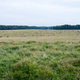 Deer in Klampenborg - PhotoDune Item for Sale
