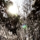 Along the Branches of Fir Trees in the Winter Forest on Sunny Day - VideoHive Item for Sale