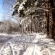 Walk Along the Path in the Snowy Forest on Sunny Day - VideoHive Item for Sale