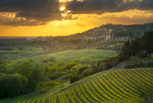 Casale Marittimo village, vineyards and landscape in Maremma. Tu - Stock Photo - Images