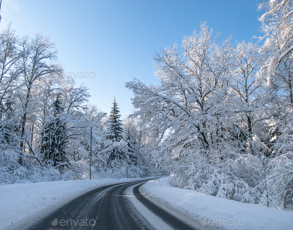Winter road in a forest - Stock Photo - Images