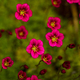Red flowers against the background of grass - PhotoDune Item for Sale