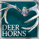 Deer Horns - 3DOcean Item for Sale