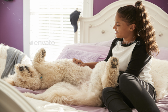 Young teen girl stroking pet dog on her bed - Stock Photo - Images