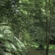 Tropical Rainforest at Summer Day in One of the Biggest Park - VideoHive Item for Sale