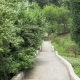 Stairs in One of the Biggest Botanical Park - Batumi, Georgia - VideoHive Item for Sale